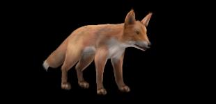 3d Fox - Can you do better?