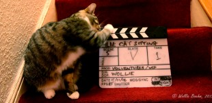 Photo: Cat Sitting - BTS