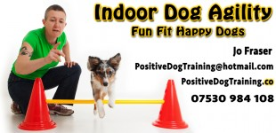 Positive Dog Training - Promo